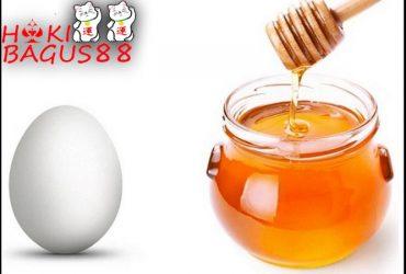 telur dan madu untuk ayam aduan