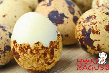 Manfaat Telur Puyuh Untuk Kesehatan Ayam Bangkok